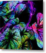 Crazy Elephant Ears Metal Print