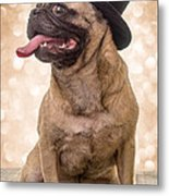Crazy Top Dog Metal Print