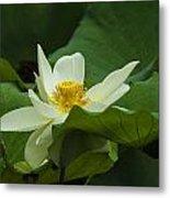 Cream Colored Lotus Metal Print