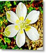 Cream Cup In Park Sierra Near Coarsegold-california Metal Print