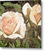 Creamy Roses Metal Print