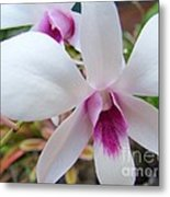 Creamy White And Hot Pink Orchid Metal Print