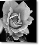 Creatively Colorless Metal Print