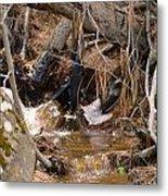 Creek 2 Metal Print