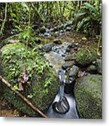 Creek In Mountain Rainforest Costa Rica Metal Print
