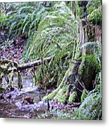 Creek Running Through The Forest Metal Print