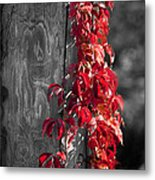Creeper On Pole Desaturated Metal Print