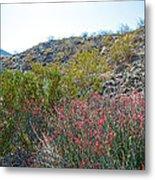 Creosote And Chuparosa On Henderson Trail In Santa Rosa-san Jacinto Nmon-ca Metal Print