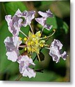 Crepe Myrtle Blossom Ring Metal Print