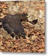Crested Serpent Eagle Metal Print