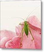 Crickets - Gryllidae Metal Print
