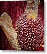 Crimson Canna Lily Bud Metal Print