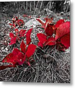 Crimson Foliage Metal Print