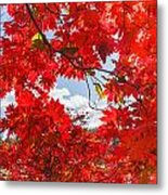 Crimson Red Leaves Background Metal Print