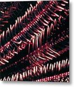 Crinoids 6 Metal Print