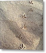 Critter Tracks In The Sand Metal Print