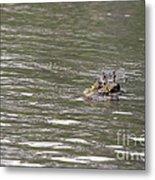 Crocodile   #0579 Metal Print