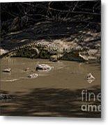 Crocodile   #7282 Metal Print