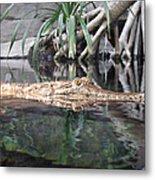 Crocodile Eyes Metal Print
