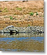 Crocodile In Watering Hole In Kruger National Park-south Africa Metal Print