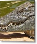 crocodile of the Nile Metal Print