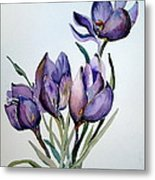 Crocus In April Metal Print by Mindy Newman