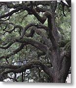 Crooked Branches Metal Print