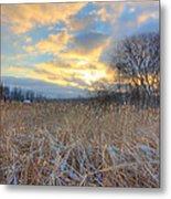 Crooked Lake Willows Metal Print