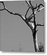 Crooked Tree Black And White Metal Print
