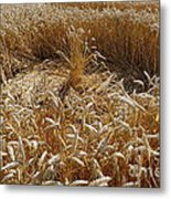 Crop Circle At Bishops Canning Metal Print