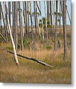 Crossed Trees Metal Print