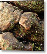 Crotchety Old Moss Covered Tree Man Metal Print