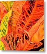 Croton's Many Colors Metal Print
