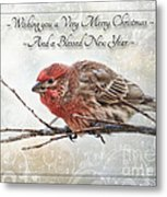 Crouching Finch Christmas Greeting Card Metal Print