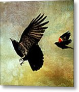 Crow And Red-winged Blackbird Metal Print