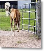 Crow Hopping Filly Metal Print by Dana Moyer