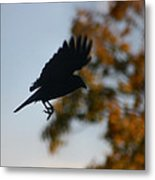 Crow In Flight 1 Metal Print