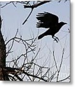 Crow In Flight Metal Print