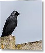 Crow Perched On A Fence Metal Print