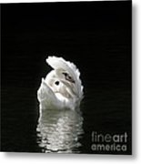 Crown Of Feathers IIi Metal Print