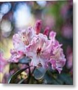 Crown Of Rhodies Metal Print