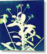 Crown Of Thorns - Blue Metal Print