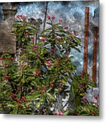 Crown Of Thorns - Featured In Beauty Captured And Nature Photography Groups Metal Print