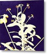 Crown Of Thorns - Indigo Metal Print by Shawna Rowe