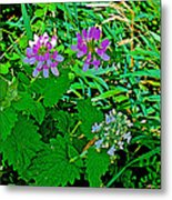 Crown Vetch And Catnip In Pipestone National Monument-minnesota Metal Print