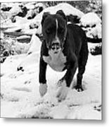 Crush Snow Run Metal Print