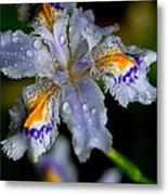 Crying Fringed Iris-iris Japonica Metal Print