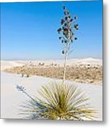 Crystal Dune Tree At White Sands National Monument In New Mexico. Metal Print