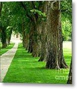 Csu Tree Path Metal Print