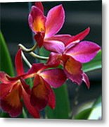 Ctna New River Orchid Metal Print
